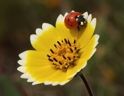 Ladybug on Tidy Tip Photographers Edge Photographer of the Quarter April–June 2014