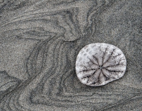 Sand Dollar HM Pictorial Palo Alto Camera Club 2014 Annual Competition